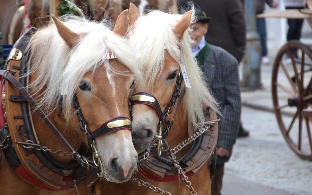 Größter Pferdemarkt Europas frühzeitig abgesagt