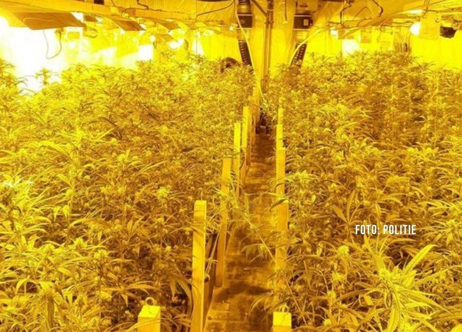Erneut Drogenplantage entdeckt: Drei Personen festgenommen