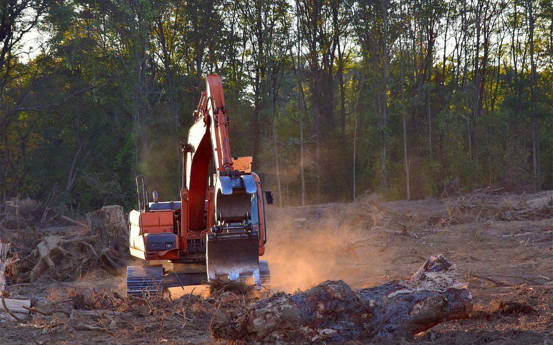 Nederland en Duitsland Europese koplopers in veroorzaken ontbossing